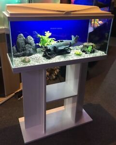 **BRAND NEW** Large Fish Tank & Stand: Heater, Filter & Water Treatment Included
