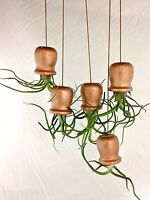 Hanging Plant Mini Air Plant Succulent, Indoor Garden, A Perfect Gift For Her