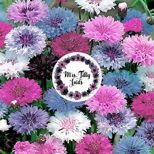100 Samen Kornblume Polka Dot  Bunte Sorte Samen Blumensamen Garten Blumen Beet