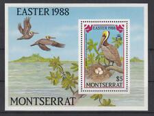 Montserrat - Michel-Nr. 705 als Block 48 postfrisch/**  (Ostern / Vögel)