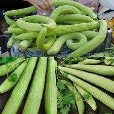 10Pcs/Pack Seeds Armenian Cucumber Belyy Plants Organic Russian Heirloom Seed