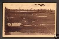 BOURBON-LANCY (71) BOVINS EN BORDS DE LOIRE