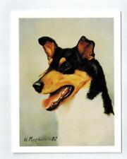 New Smooth Collie Head Study Notecard Set - 12 Notecards Ruth Maystead Col-2