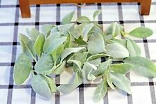 35 PCS Artificial Lambs Ear Leaves Greenery for Crafts Weddings and DIY Projects