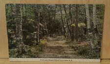 Postcard NH Road Near SARGENT SCHOOL GIRLS CAMP dirt trail birch trees scene (32