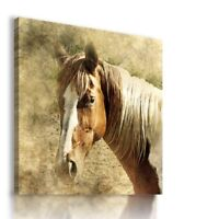 PAINTING DRAWING HORSES VISUAL ART PRINT Canvas Wall Picture  R14 MATAGA .