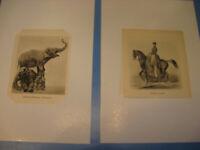 Circus Renz 1930.Jahre Drucke,Bilder von Artisten Thompson-Circus pictures 1930