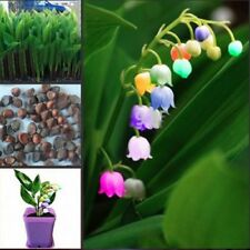 200 Heirloom White Lily of the Valley Convallaria majalis Perennial Flower Seeds