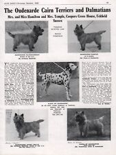 CAIRN TERRIER DALMATIAN 1948 DOG BREED KENNEL ADVERT PRINT PAGE OUDENARDE KENNEL