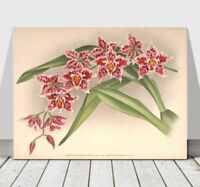 """JEAN LINDEN - Beautiful Pink Speckled Orchid #27 - CANVAS PRINT POSTER - 10x8"""""""