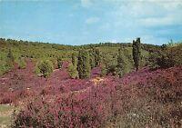 B35602 Heidelanschaft im Totengrund Luneburger Heide   germany