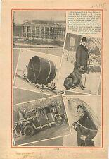 Città Universitaria di Roma Campus Rome/Kaiser Wilhelm II Dog 1935 ILLUSTRATION