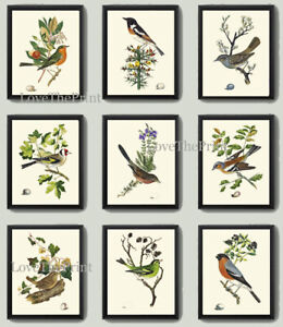 Unframed Bird Print Set of 9 Antique Vintage Birds Home Room Decoration Wall Art