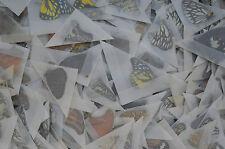 lot of 100 Mixed Unmounted Butterflies # NEW COMING 2016 # Vietnam NORTH