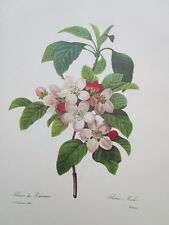 P.J. Redoute 109 Fleurs de Pommier vintage print