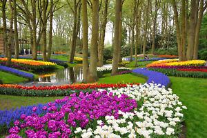 VLIES Fototapete-TULPEN GARTEN-(337V)-350x260cm-7Bahnen 50x260-Wiese Wald Blumen