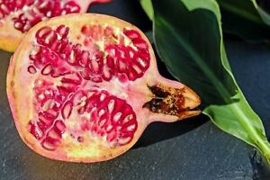 100 grams 100% pure pomegranate fruit extract 10:1