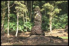 589001 Lava Tubo En Lava árbol Estatua Monumento A4 Foto Impresión