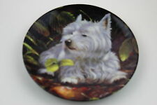Royal Worcester Plate West Highland White Terrier by John Silver SIGNED PlateN11