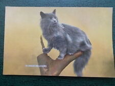 VINTAGE CAT POSTCARD - IN PROUD POSSESSION - CATS KITTENS