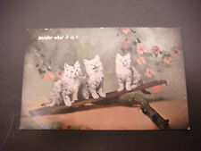 """Valentine's Series Post Card, 3 Cats Titled """"Wonder What It Is?"""", England,Unused"""
