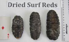 Australia Dried Surf Fish/Sea Cucumber 澳大利亚/澳洲野生秃头乌枣海参(已淸除内脏)