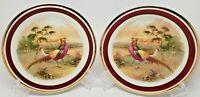 Schwarzenhammer Imperial Porzellan Pair of Red Golden Pheasants Plates Germany