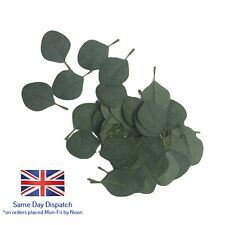 Single Eucalyptus Leaf Grey/Green packs of 3, 12 or 50 leaves buttonhole corsage