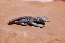 Zuni Serpentine Lizard From Jonas Hustito