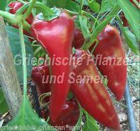 🔥 Chervena Chushka * Paprika rot aus Bulgarien * 10 Samen