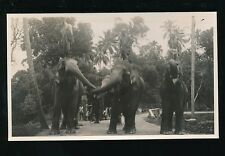Ceylon Kandy Elephants and mahouts on road 1933 photograph