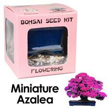 Eve's Miniature Azalea Bonsai Seed Kit to Grow Miniature Azalea from Seed