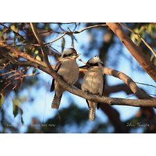 Kookaburras 1000 piece Jigsaw by John Temple