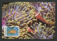 MALEDIVEN MK FISCHE FISH ANEMONENFISCH ANEMONEFISH CARTE MAXIMUM CARD MC CM m118
