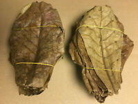 100 Seemandelbaumblätter 10-20cm lose Terminalia Catappa Leaves echter BESTPREIS