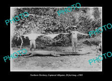 OLD POSTCARD SIZE PHOTO NORTHERN TERRITORY MEN WITH 20 Ft CROCODILE c1905