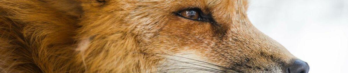 screen_fox24