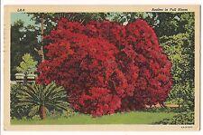 AZALEA IN FULL BLOOM Flowering Tree Bush Texas TX  LINEN Postcard FREE SHIP 1949