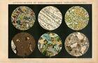 1895 ROCKS STONES UNDER MICROSCOPE Antique Chromolithograph Print