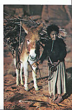 Animals Postcard - Navajo Lass and Her Burro - Donkey     U957
