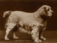 CLUMBER SPANIEL CHARMING DOG GREETINGS NOTE CARD LOVELY STANDING DOG