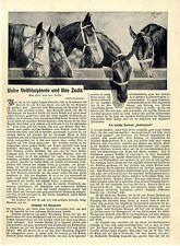 Olaf von der Lassa Unsere Vollblutpferde und ihre Zucht Rennsport Jockei v.1911