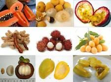 mix 50 tropical cashew nut,jackfruit,durian,longan asian tree/plant/fruit seeds