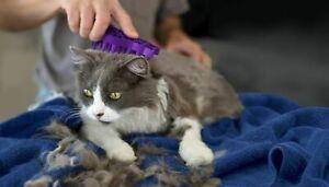KONG ZoomGroom Cat Shedding Rubber Brush Grooms Bathe Caress Reduce  Hair Balls