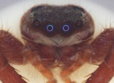 More details for clarke & page antique microscope slide of a jumping spider head, 1920