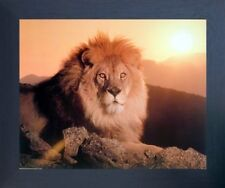 Lion King (Sunset) Big Cat Wild Animal Wall Decor Framed Art Print Picture