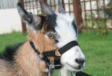 Goat Headcollar