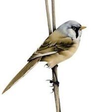 British Songbirds 10 Blank Notelet Refill pack by Gareth Watling FREE P&P