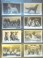 1939 DODS dog breeds Senior Service Tobacco Card comp. Set 48 cards lot vintage