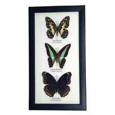 More details for vie real handmade taxidermy 3 butterflies mounted under glass size 17.5x14cm